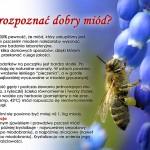 jak_rozpoznac_dobry_miod_tyl